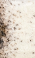 Kožešina metráž 10618 Lynx